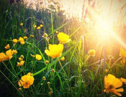 a-little-sunshine-goes-a-long-way